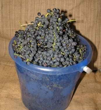 виноград в ведре