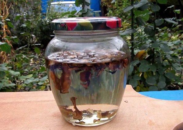 Настойка на перегородках ореха