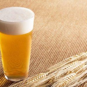 Пшеничное пиво в бокале и колоски