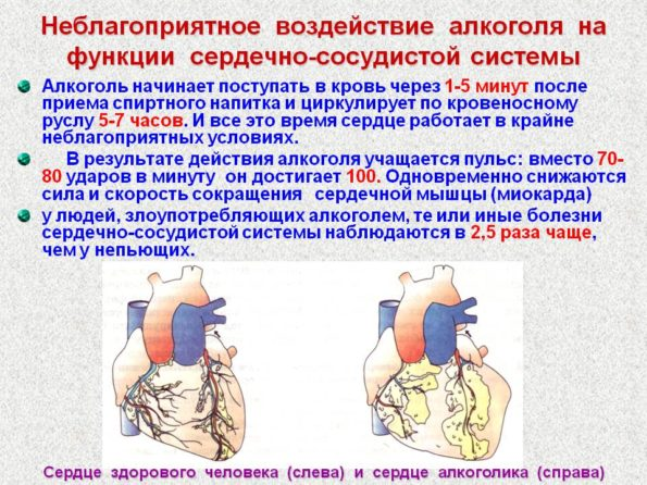 воздействие алкоголя на сердце
